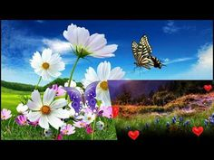 Miłego dnia. - YouTube Youtube, Plants, Plant, Youtubers, Youtube Movies, Planets