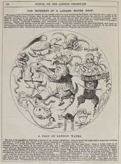 It was believed that bad smells caused disease. It was obvious; in poor districts, the air was foul and the death rate high. In the prosperous suburbs, no smells – therefore no disease. Image: Punch cartoon showing the creatures in Thames water, 1850