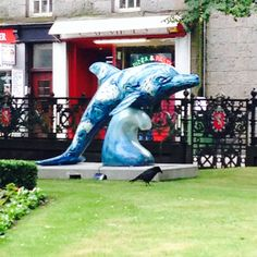 Aberdeen will dolphins