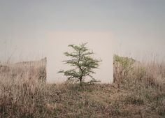 Studio portraits and landscape photography merge in Myoung Ho Lee's series of trees in Mongolia and Korea, set against a white canvas backdrop. Lee digitally removes ropes and assistants, suggesting a less mediated encounter with a solitary and wonderful product of nature. (At Yossi Milo Gallery in Chelsea through Aug 25th). Myoung Ho Lee, Tree…#9, archival inkjet print, 15 ¾ x 22 1/8 inches (image), 2017.