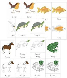The Helpful Garden: Montessori Zoology - Classes of Vertebrates Nomenclature Set for ages 3-6: Parts of Bird, fish, turtle, frog, horse