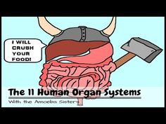Human Body Video: review of all systems