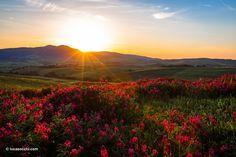 tuscan landscape... volterra