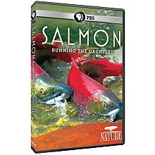 Salmon: Running the Gauntlet - This film will investigate the parallel stories of collapsing Pacific salmon populations and how biologists and engineers have become instruments in audacious experiments to replicate every stage of the fish's life cycle. In its exposure of a creative, complex, and expensive approach to managing salmon, the film reveals one of the most ambitious plans ever conceived for taking the reins of the planet.