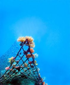 ocean sculptures that revive dying coral reefs