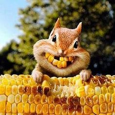 Corny squirrel bright smiles for Thanksgiving Baby Animals, Funny Animals, Cute Animals, Beautiful Creatures, Animals Beautiful, Dental Humor, Seriously Funny, Tier Fotos, Chipmunks