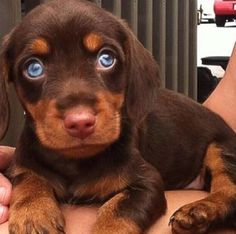 Look at those clear blue eyes! Soooo adorable!