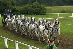 14 Kladrupper horses in harness, photo by Autor E-mail jan.savicky@webhouse.cz