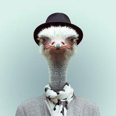 stylish ostrich... Love this