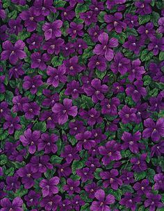 Violets Fabric by Timeless Treasures fleur-c6503-violet