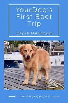 It's your dog's first time on a boat--here's how to make it great! #boatdog #boating #liveaboard Dogs On Boats, Taking Dog, Boating Quotes, Brain Games For Dogs, Boat Cleaning, Dog Friendly Hotels, Boat Stuff, Dog Shampoo, Dog Activities