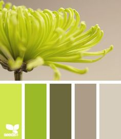 Find the Palettes you Love - cool website for finding color palettes that really work well together.