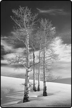 insidewarp:  Winter Is Coming istymorrning:  by Harry Lichtman