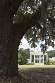 Historical Concepts designs a Greek Revival home with Southern roots. Greek Revival Architecture, Southern Architecture, Southern Charm, Southern Living, Historical Concepts, Greek Revival Home, Florida Home, Humble Abode, Historic Homes
