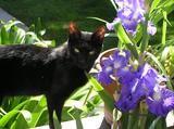 New Kitten Klub Member - Jinx