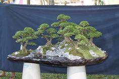 Bonsai Bonsai Forest, Bonsai Art, Bonsai Garden, Dwarf Trees, Bonsai Styles, Moss Garden, Miniature Trees, Green Art, Growing Tree
