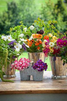 Cut Flowers ready in buckets