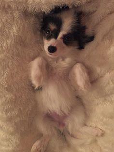 Daizy / 3 months
