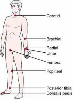 Looking for online definition of apical pulse in the Medical Dictionary? What is apical pulse? Meaning of apical pulse medical term. What does apical pulse mean? Emergency Medical Technician, Medical Assistant, Medical Facts, Medical Information, Medical Dictionary, Free Dictionary, Nursing Assessment, Nursing School Notes, Nursing Schools