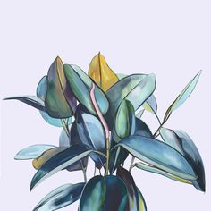 'Ficus' is a limited edition fine art print of an original oil painting. It is printed on high quality 300gsm cotton rag Hahnemuhle paper....