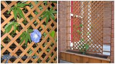 Creative+Planter+Ideas+for+the+Garden. Cedar box placed under trellis screen is planted with annuals each year to help camouflage an ugly view of the neighbour's garbage cans beside the front door.