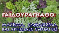 Healing, Herbs, Youtube, Herb, Youtubers, Youtube Movies, Medicinal Plants