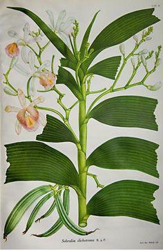 Las orquídeas del Tequendama