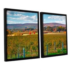 ArtWall Steve Ainsworth Vineyard in Autumn 2-Piece Floater Framed Canvas Set, Size: 32 x 48, Purple