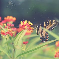 .@Penny Douglas People | Today would be a lovely day to be a butterfly. #inspiration #butterfly #flowe...
