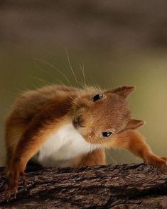La nature - Eichhörnchen & Co. Cute Funny Animals, Cute Baby Animals, Smiling Animals, Nature Animals, Animals And Pets, Wild Animals, Wildlife Nature, Beautiful Creatures, Animals Beautiful