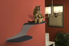Amazon.com: The Refined Feline Cat Cloud Cat Shelves in Titanium, Right Facing: Pet Supplies