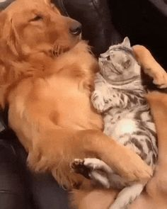 This gon' be my wittle pussy bonding with dat shexy Golden, Ed Sheeran