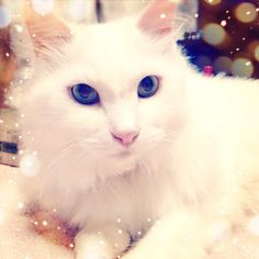 Glamour cat with #cameran filter @chelcian-#cameran