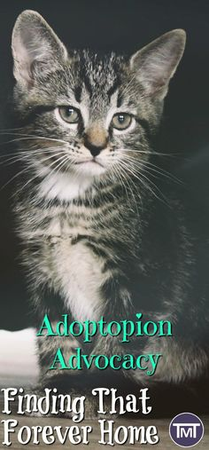 kitten standing - adoption advocacy on rehoming cats and rescues as well as UK and US cat rehoming charities, the adoption process. Cute Cats, Funny Cats, Open Adoption, Adoption Process, Adopting A Child, Pet Accessories, Pet Care, Parenting Hacks