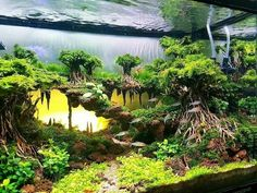 Faszinierende Aquarium Aquarien Design -You can find Fish tank and more on our website. Planted Aquarium, Best Aquarium Fish, Aquarium Terrarium, Aquarium Aquascape, Aqua Aquarium, Fish Tank Terrarium, Aquascaping, Aquarium Landscape, Nature Aquarium