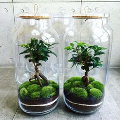 GreenBells