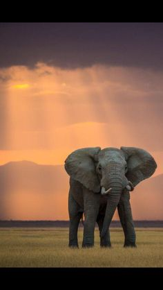Beautiful Elephant. What a great shot!      Animals, Wildlife, Pictures, Photography, Africa