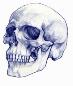Skeleton Drawings, Dark Art Drawings, Skeleton Art, Drawing Sketches, Pencil Drawings, Skull Reference, Drawing Reference, Anatomy Art, Anatomy Drawing