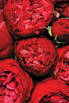 Monochromatic Bouquets