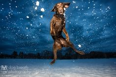 Adorable portraits of dogs by pet photographer Kaylee Greer of Dog Breath Photography. Love My Dog, Pub Vintage, Dog Breath, Pet Photographer, Professional Photographer, Montage Photo, White Dogs, Dog Coats, Bored Panda