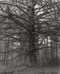 """Robert Adams, l'endroit où nous vivons : une exposition au Jeu de Paume : Le photographe #RobertAdams, connu pour ses images en noir et blanc de l'Ouest américain, fait l'objet d'une grande rétrospective au Jeu de Paume. Cette exposition intitulée """"L'endroit où nous vivons"""" met à l'honneur une nature sauvage transformée par l'homme."""