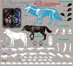 Anatomy of wild dog wolf ☆ character design references Animal Sketches, Animal Drawings, Wolf Drawings, Animation Reference, Drawing Reference, Cat Alice, Dog Anatomy, Animal Anatomy, Wolf Sketch