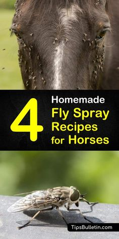 Discover a few easy homemade fly spray for horses recipes to keep you, your horses, your stables, and even your home free from these biting insects. Before you know it, you will have a fly-free zone! #horses #fly #repellent