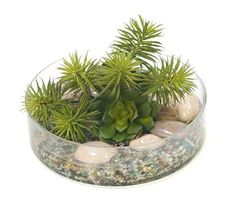 A30947 Succulent Mix in Round Glass Vase with Stones