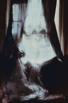 Amazing Photography by Amber Ortolano