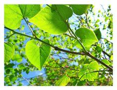 Love Leaves by Marita-Covarrubias