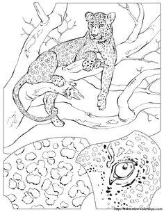 Realistic Cheetah Coloring Page