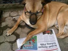 I just want to read my newspaper in the morning... dont disturb me pls!