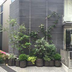 Petite jungle de pots en géotextile 50L et de petit potager Bacsquare 4 ! Idéal pour habiller le mur de végétation !