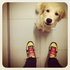 Doggie & Sneakers